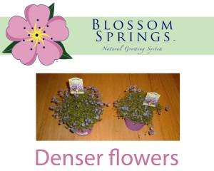 blossom-springs