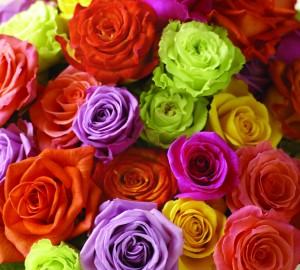 colors_of_roses