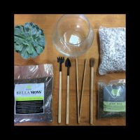 DIY Terrarium Kits